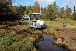 Pool and other wetland restoration